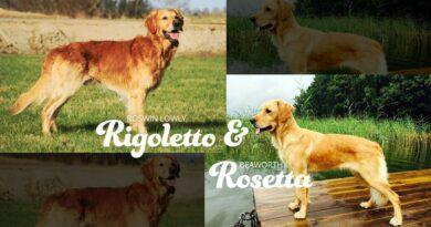 Rigoletto & Chilli