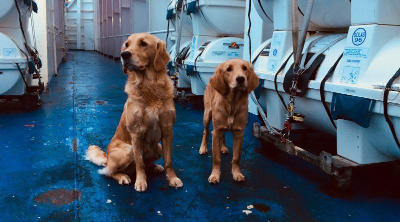 Chilli & Mira ombord Stena Germanica, på väg mot Kiel