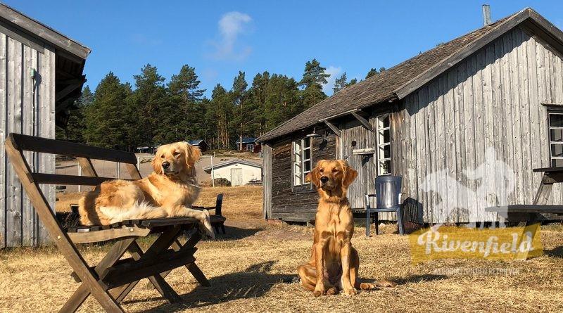 Vida och Mira i Sandviken, norra Ulvön
