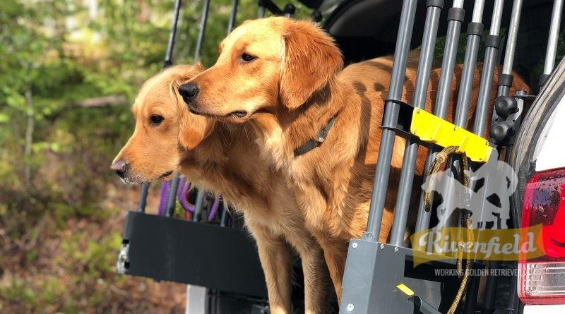 Vida och Mira på jaktprov