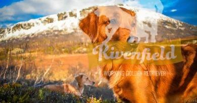 Nikki, Hardangervidda