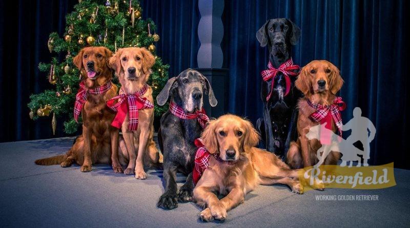 God Jul från Rivenfield