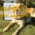 Bentley examinerad specialpedagoghund, aka Rivenfield Orlando, Operakullen