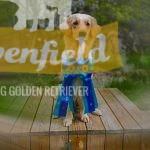 Bianca 1:a pris 100p x 3, aka Rivenfield Giovanna d'Arco