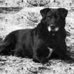 S:t John's Water Dog